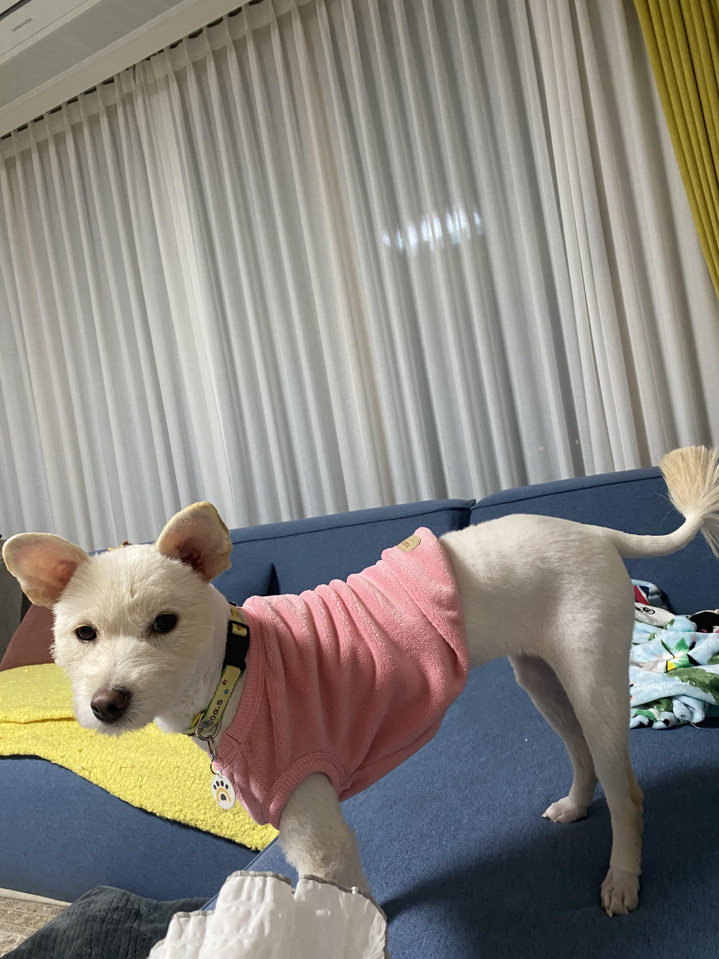 강아지 사진을 올려주세요